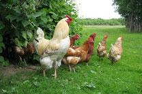 Кормовые добавки для домашнего скота и птицы