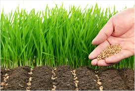 Газонные травы, сидераты, ландшафтные материалы