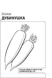 Daykon-Dubinushka