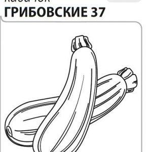 gribovskie